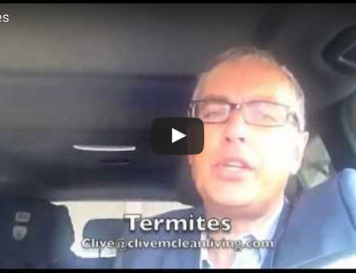 If you have termites, you should watch this…